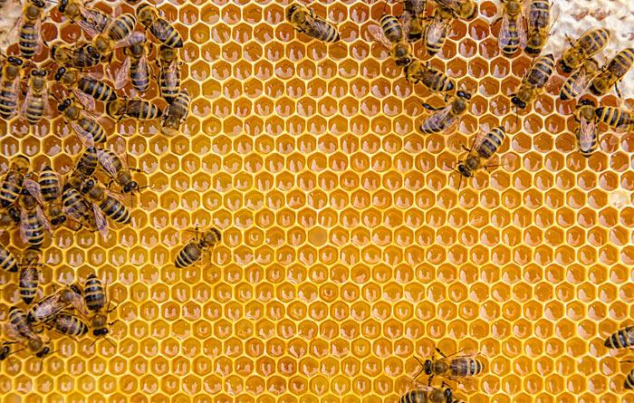 Honigmanufaktur Pfälzerwald - Waben